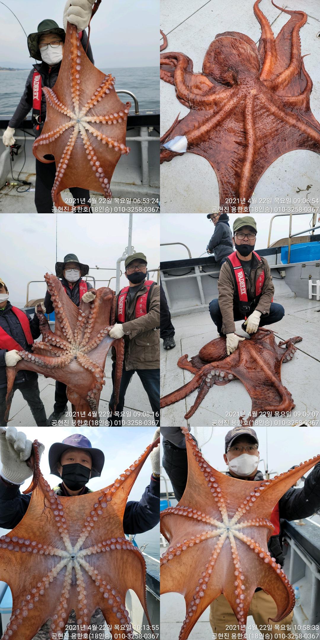 21.04.22 대왕문어26kg 조황
