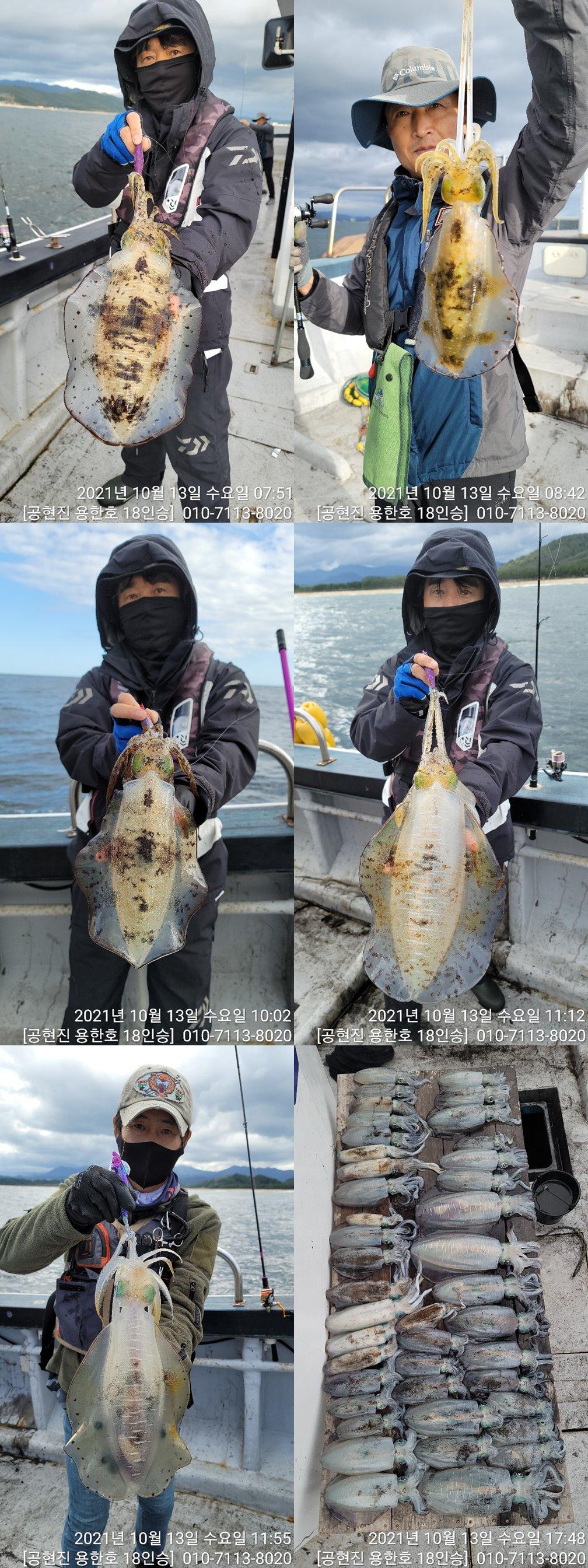 21.10.13 무늬오징어 팁런 조황