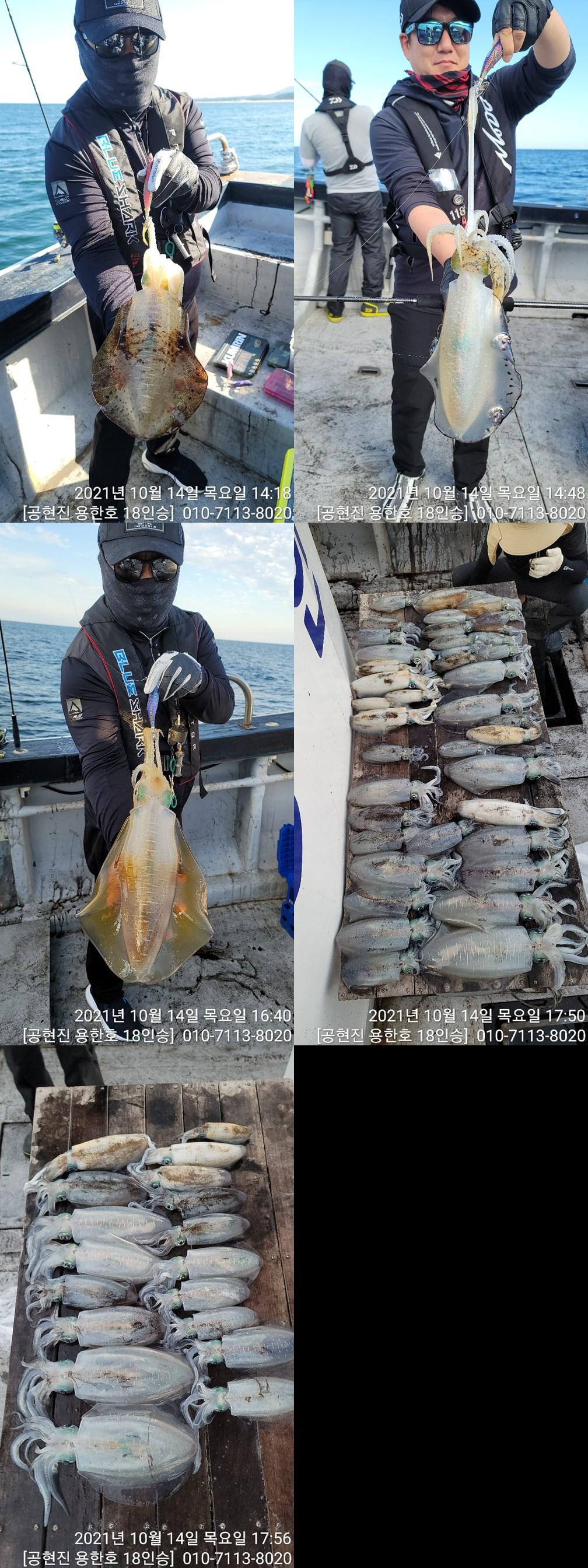 21.10.14 무늬오징어 팁런 조황